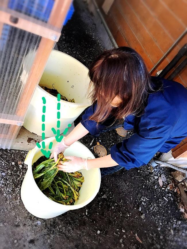 野沢菜の漬け物の簡単レシピと味の感想