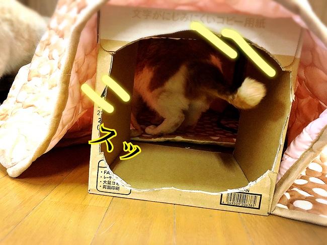 猫の寒さ対策!『ニャン太のあったか猫用こたつ』を購入してみました!
