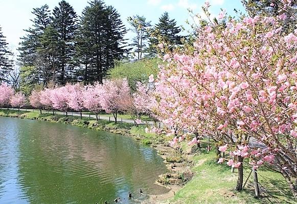 軽井沢プリンスホテル桜