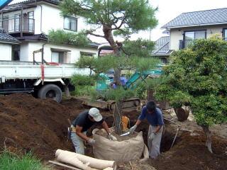 木の植え方・育て方