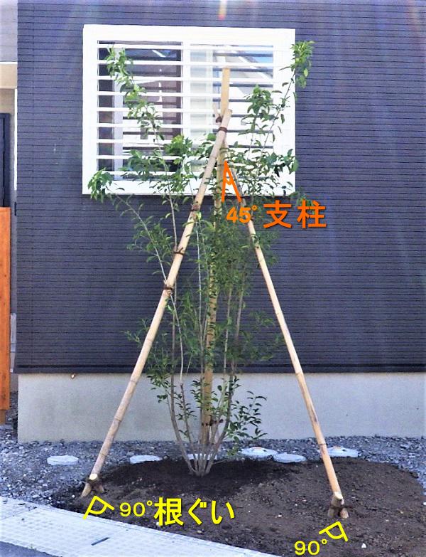 ④庭木の植え方手順【支柱・添木】