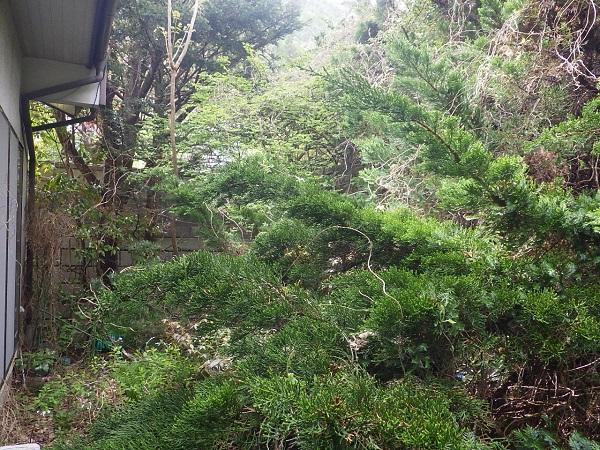 住まなくなった家の木の伐採処理・庭の管理 塩尻市 I邸