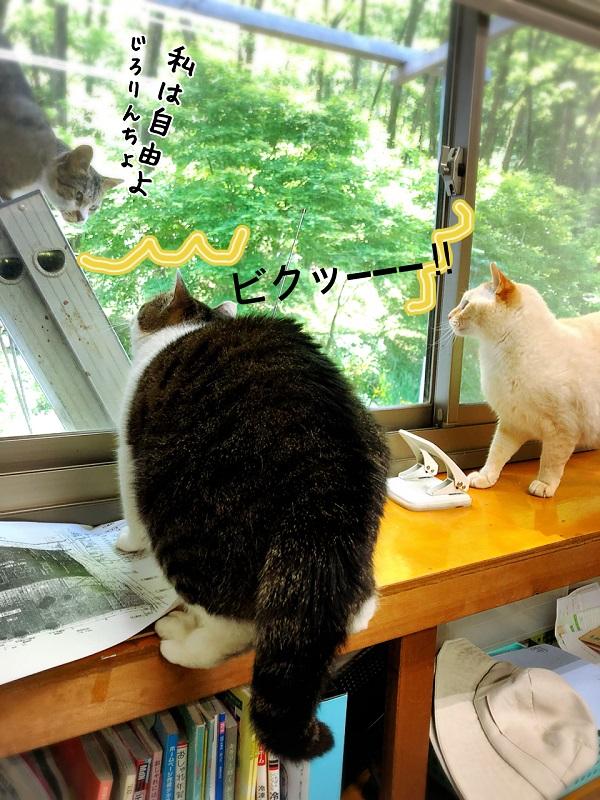 家猫用ベランダついに完成!にゃんこ大満足のくつろぎスペース!