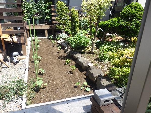 庭の一角を家庭菜園にリフォームで野菜作りデビュー!