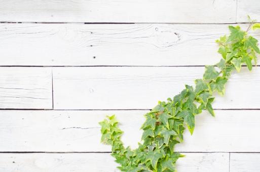 壁を使ったガーデニング壁面緑化