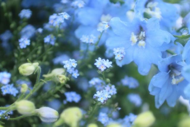 春から夏の花壇 宿根草(暑さに強い植物)・・・アメリカンブルー・バーベナ・ストケシア・ゲンペイコギク 一年草(長く咲き続けるもの)・・・ハナスベリヒユ、アゲラタム、インパチェンス