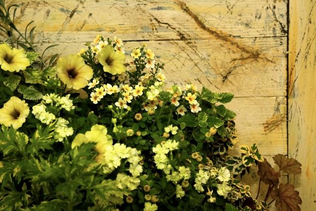 寒い地域や日陰に強い植物