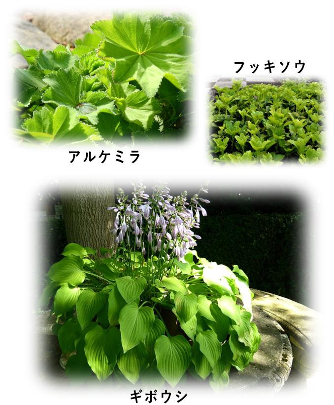 葉が面白い植物