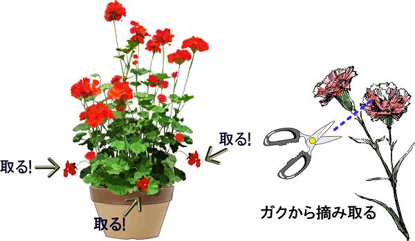 花がらの摘み取りやり方