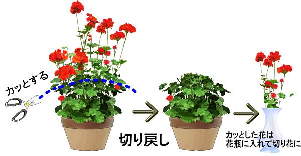 花を長持ちさせる方法【株を元気にするコツ!】切り戻しやり方