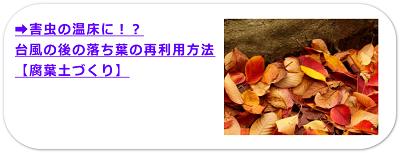 害虫の温床に!?台風の後の落ち葉の再利用方法