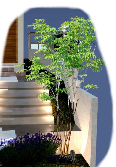 シンボルツリーや樹木を照らす照明