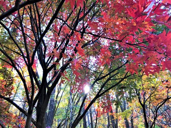 塩尻市紅葉がきれいです