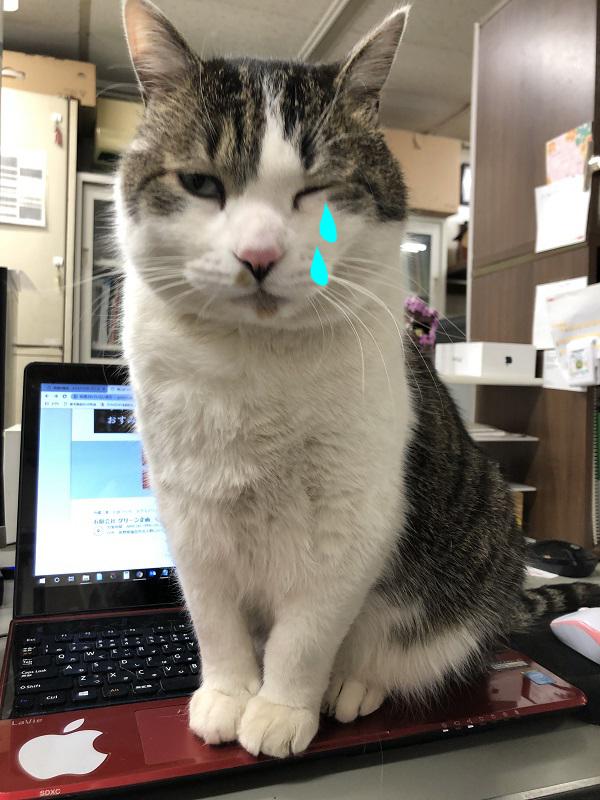 猫の花粉症
