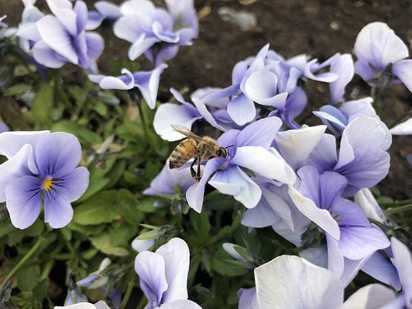 ひと手間で花壇の花を長持ちする方法