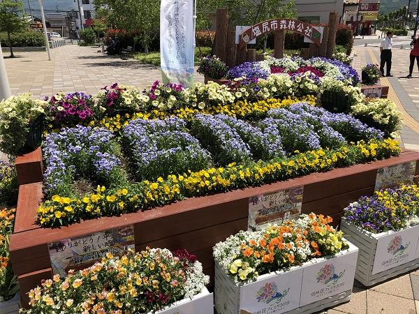 巨大プランターのお花の植え替えをしました!