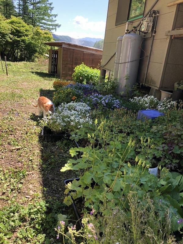 植え替え前の花の確認