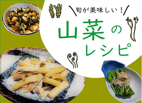 天ぷら以外の山菜の美味しいレシピ【うど・こごみ・うどぶき・ウルイ・たらの芽】
