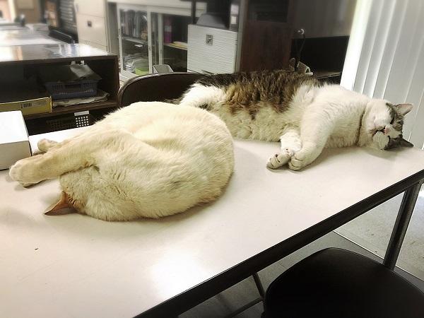 猫がいる会社の一日。