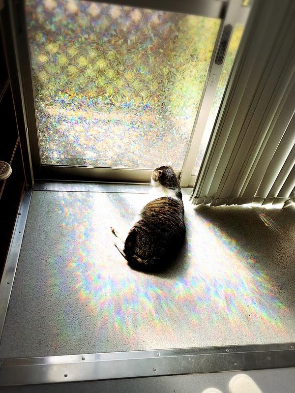 おやつ後のお昼寝 午後3時、西日の当たるお客様用玄関で日向ぼっこ。