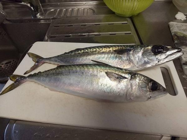 釣った魚の美味しいレシピ