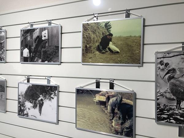 園内施設のトキ博物館には、日本で最後のトキ『キン』の剥製や、トキの歴史、トキの保護活動などが詳しくみて体験することができます。