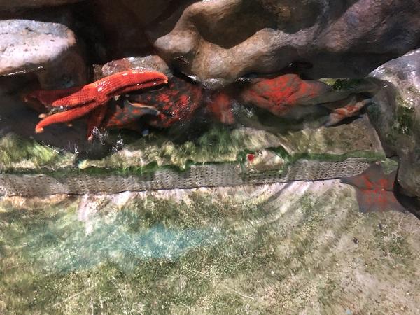 """公園内にある""""佐渡らしい水族館""""「あげしま水族館」へ。"""
