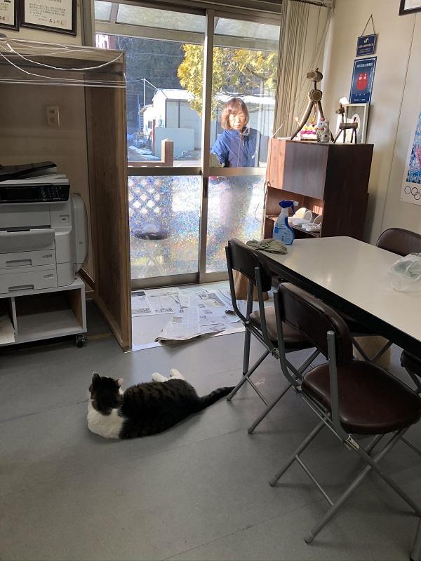 窓ふきと猫