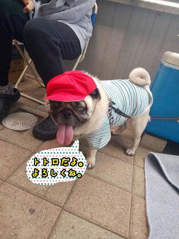 安塚ホルモンと東山牛ハラミでBBQ☆