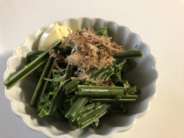 針ノ木岳に山菜採りへ行ってきました!
