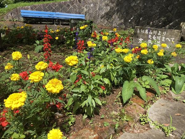 階段廻りは水色の紫陽花が元気よく咲いています。ガクアジサイ