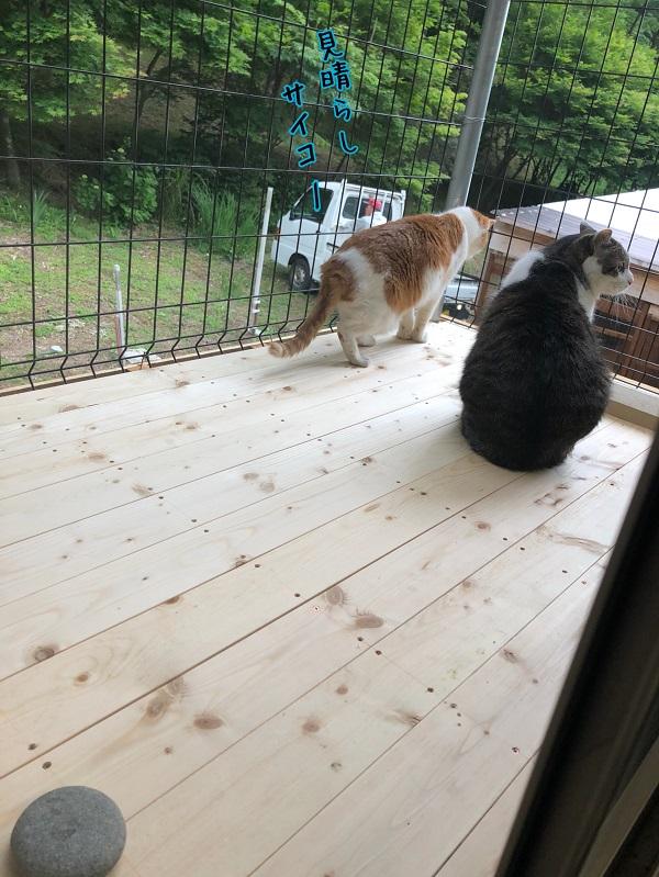 外の空気が吸える!猫専用ベランダ作成計画!
