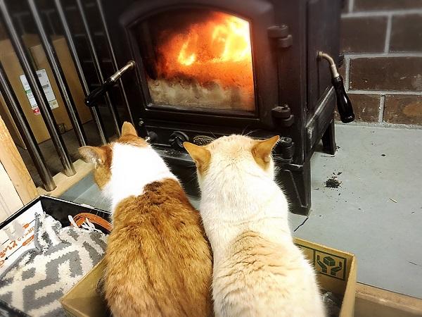 猫も快適!やっぱ最高薪ストーブ!