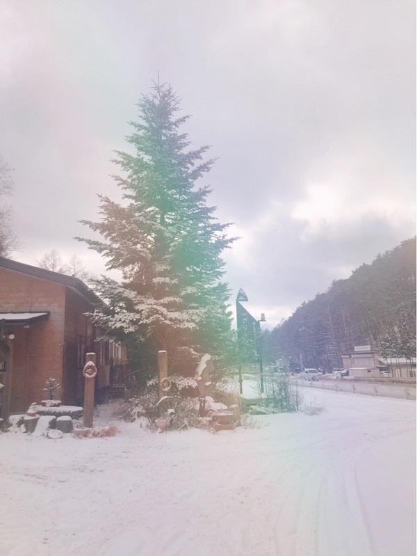 雪降りましたね!