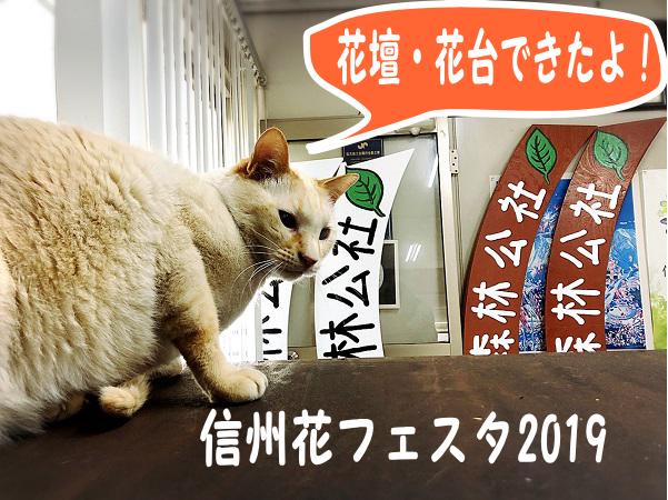 信州花フェスタ2019の花壇と花台出来ました★