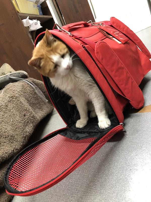 ペット防災訓練