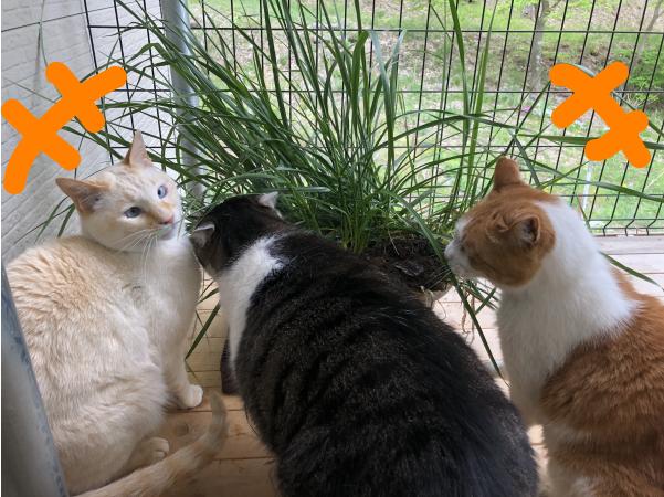 猫専用ベランダの様子
