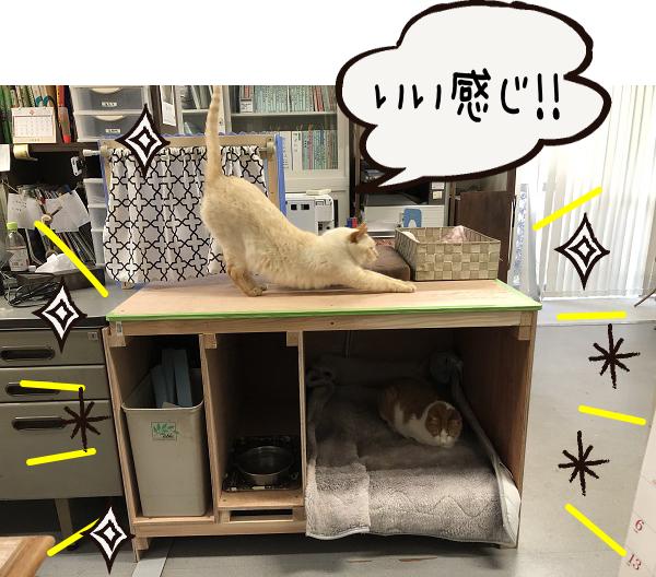【DIY】猫ベット新調しました!!