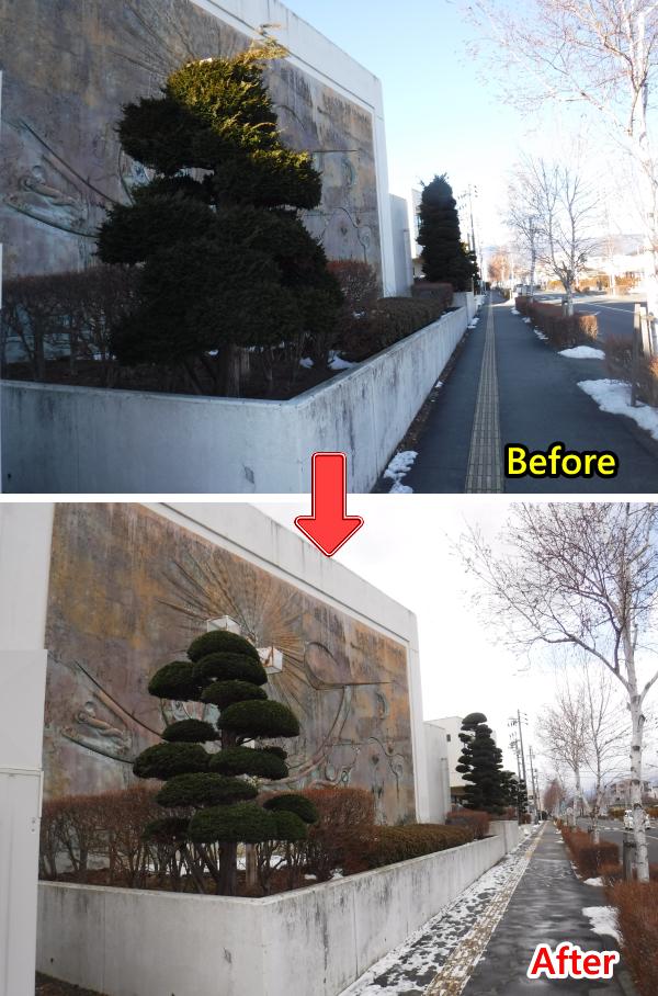 塩尻総合文化センターの庭木剪定作業をしました!