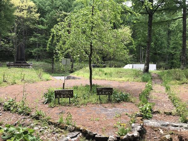 せっかく無料でいただけるということなので、地元の公園の花壇に植えました。