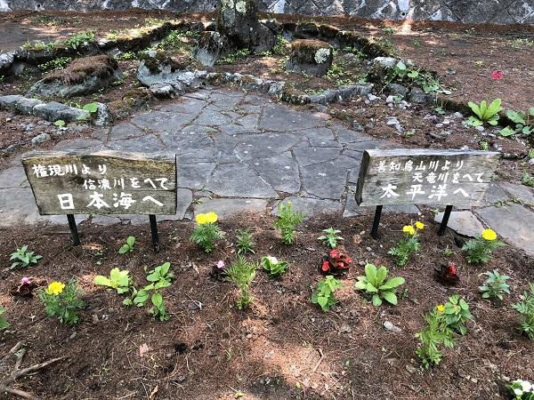 コロナで大量に売れ残った花の苗木を利用して。