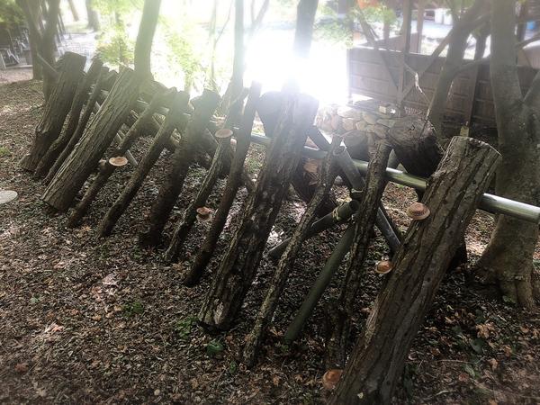信州花フェスタ2019~小坂田公園道の駅まつり~で、菌打ちしたしいたけとなめこの原木が、この秋、 ついにぞくぞくと収穫できました!!