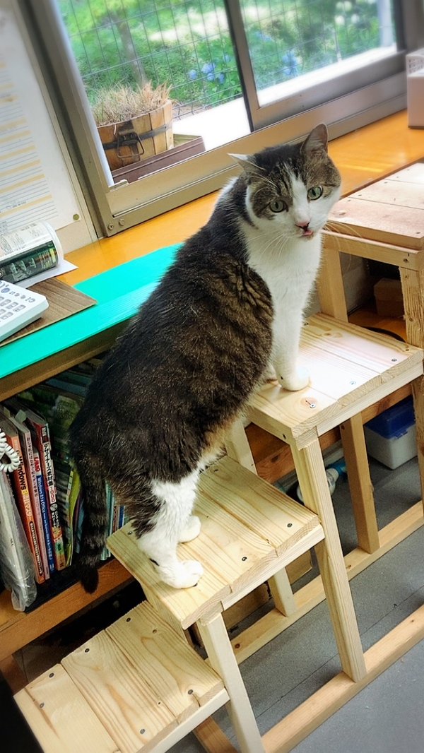 猫専用ベランダにつながるスロープを階段にリメイク☆